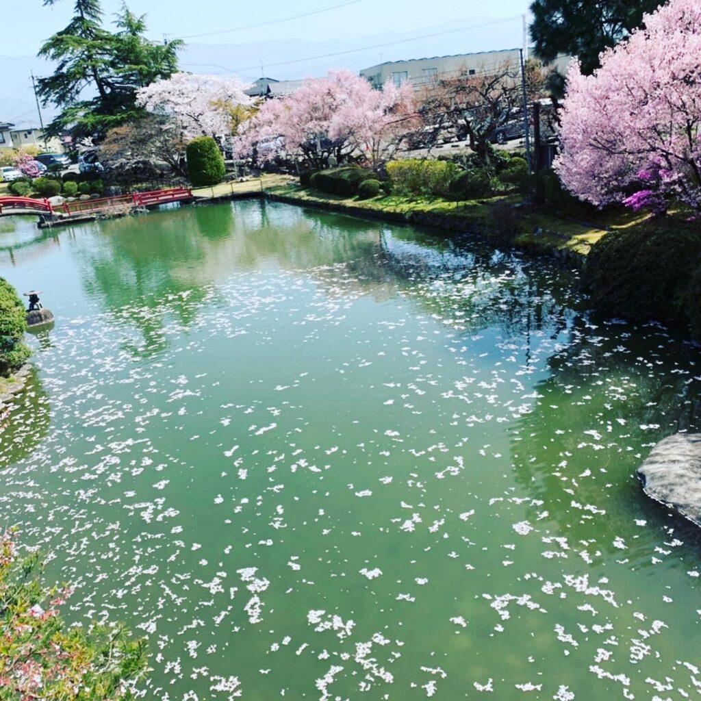 ビーラクスマツカワ桜池